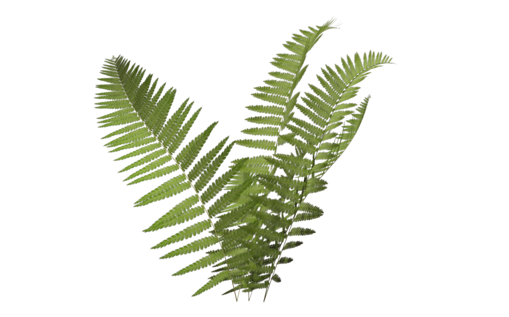 Fern Icon Png image #26178