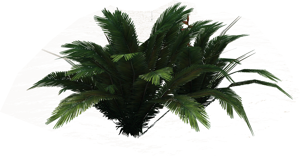 PNG Ferns Clipart image #26194