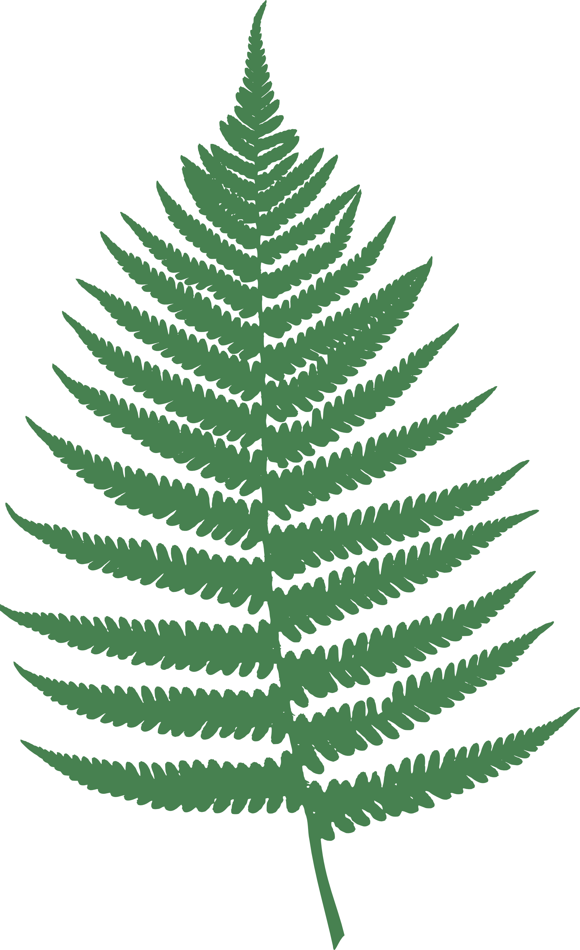 Ferns In Png image #26196