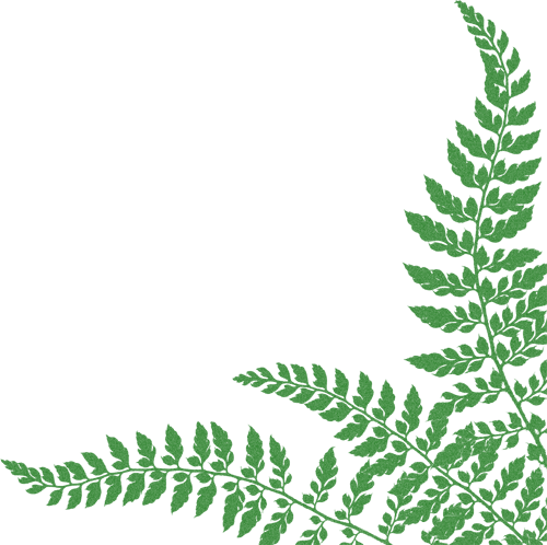 Picture Ferns Download image #26197