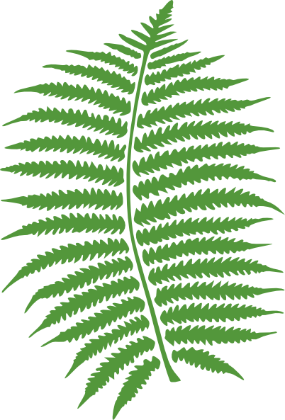 Ferns In Png image #26201