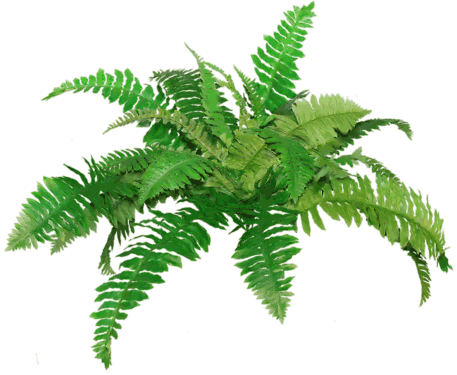 High-quality Ferns Cliparts For Free! image #26182