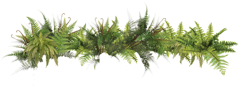 Picture Ferns PNG image #26184