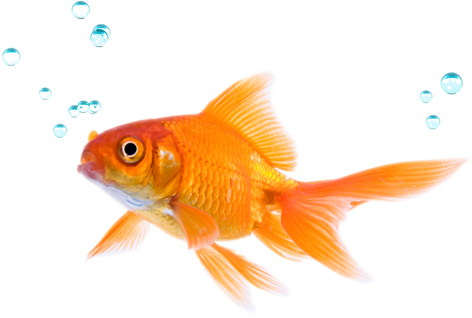 Png Image Best Fish Collections image #26349