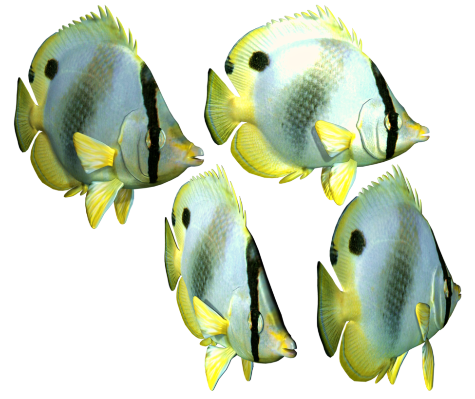 Clipart Fish Download Png