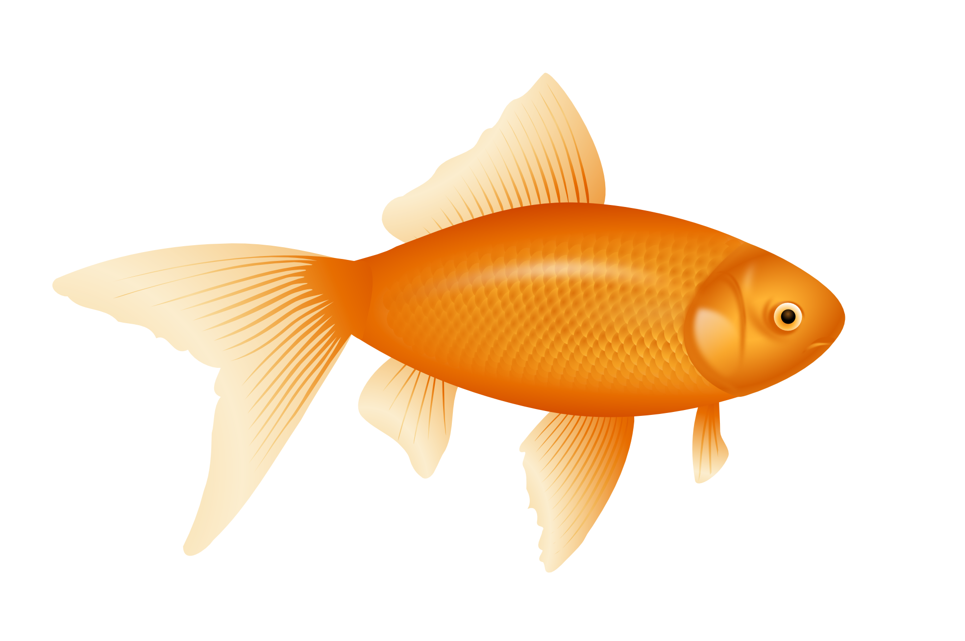 High Resolution Fish Png Icon image #26331