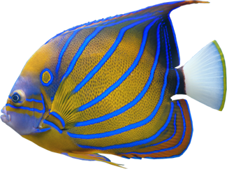 Fish Pictures Free Clipart