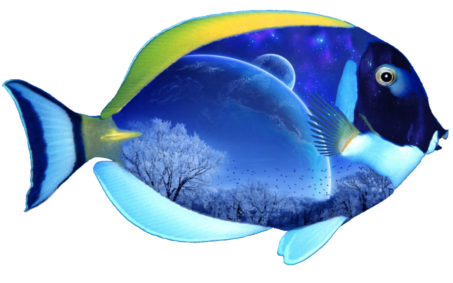 PNG File Fish
