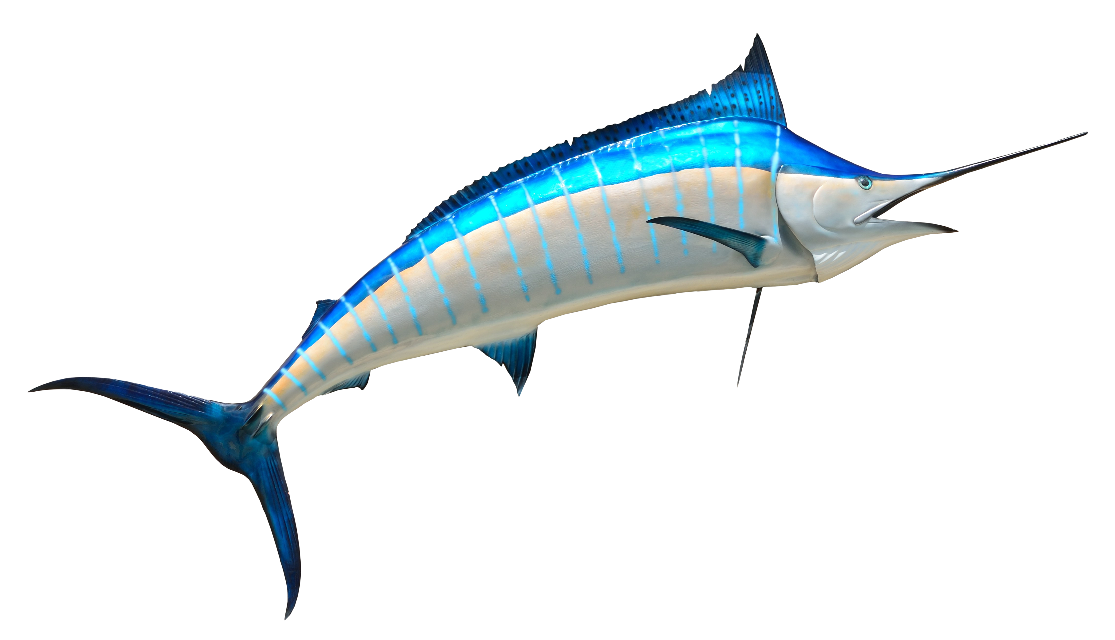 Fish PNG Transparent Image
