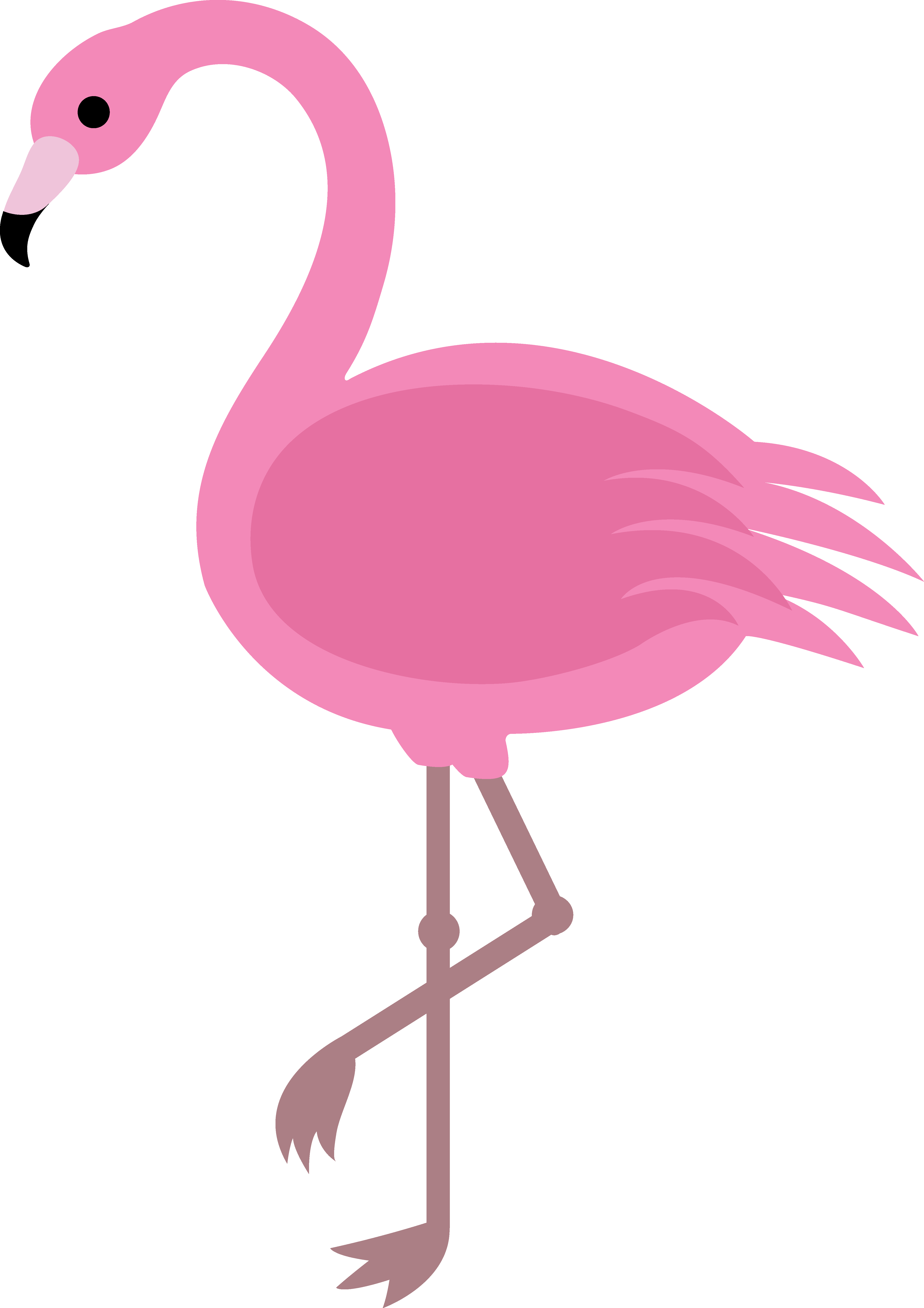 Flamingo Photo Pictures
