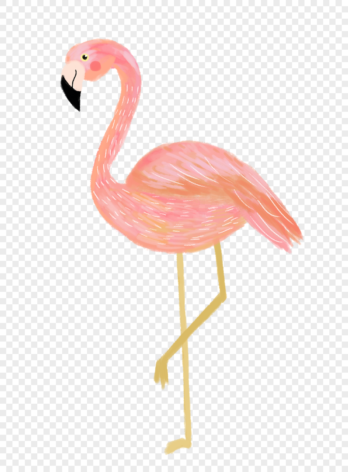 Flamingo Transparent Background Images