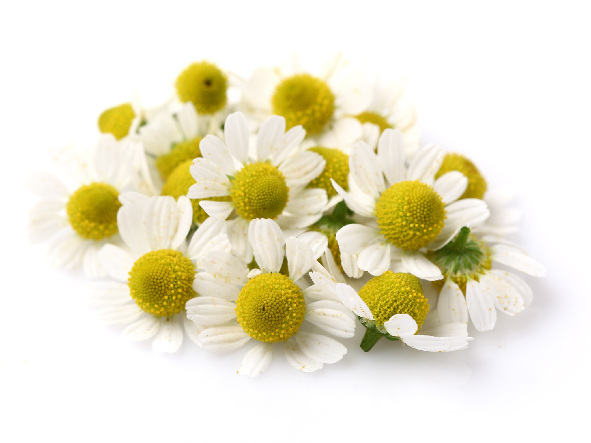 Flower Chamomile Plant Yellow Essential Oil Herbal Distillate  image #48748