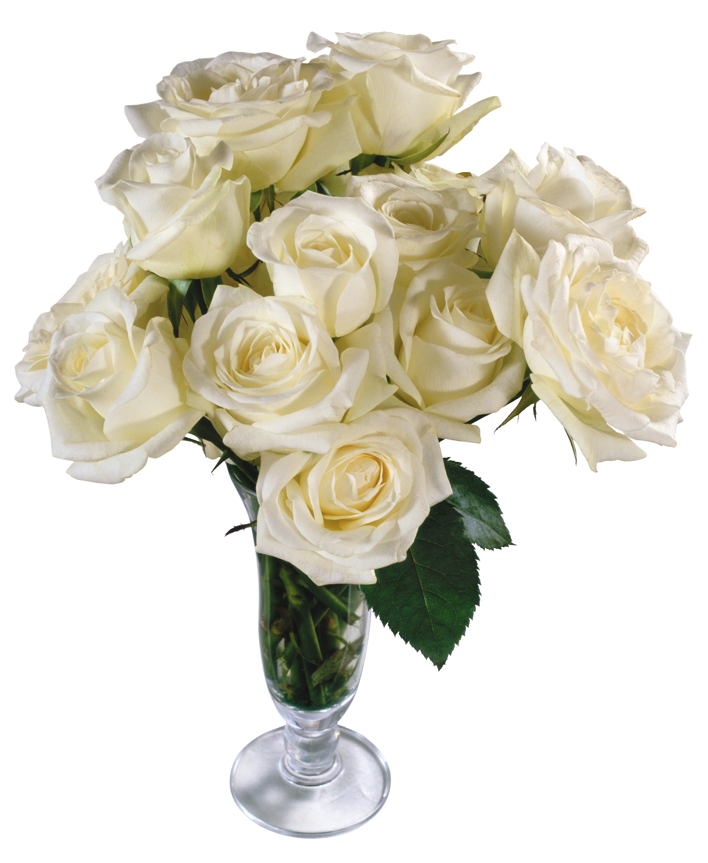 Flower Petal Cut Flowers Rose Bouquet PNG image #48789