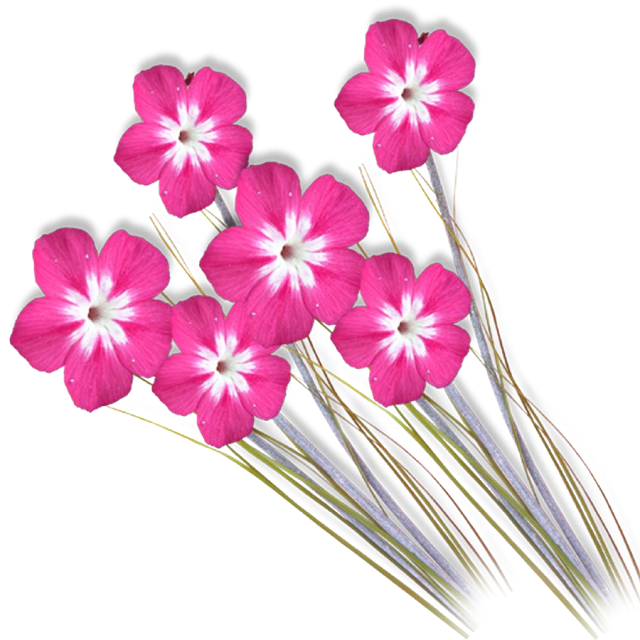 flower photoshop background png
