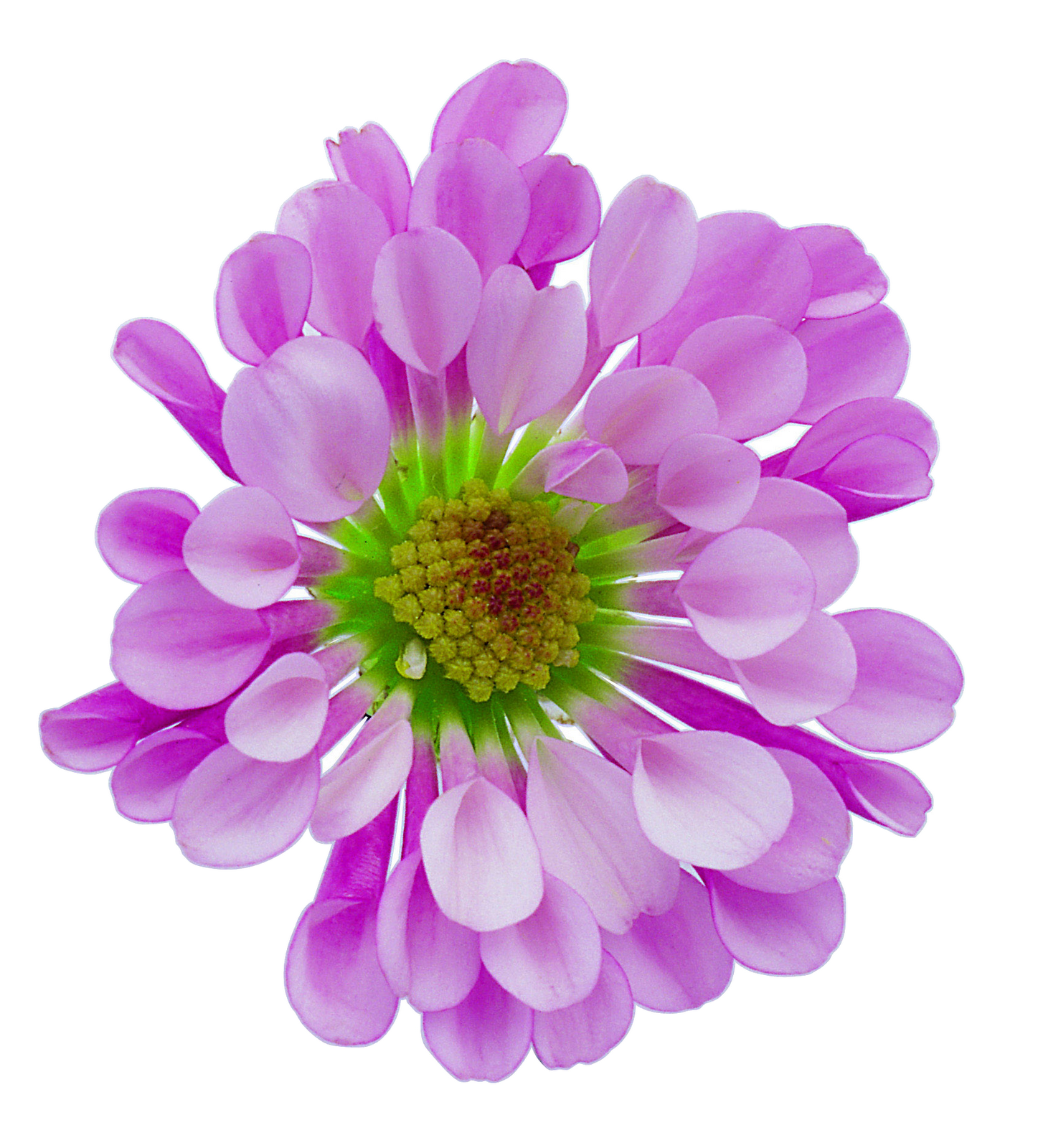 Flower Png Free Images Download