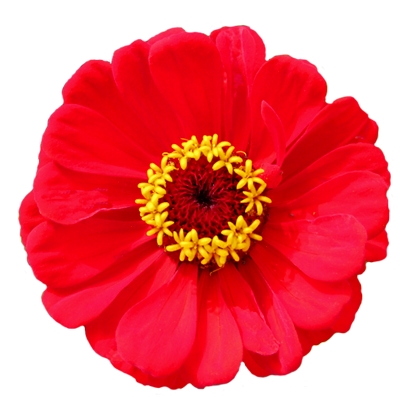 Free Vector Flower Png Download image #17951