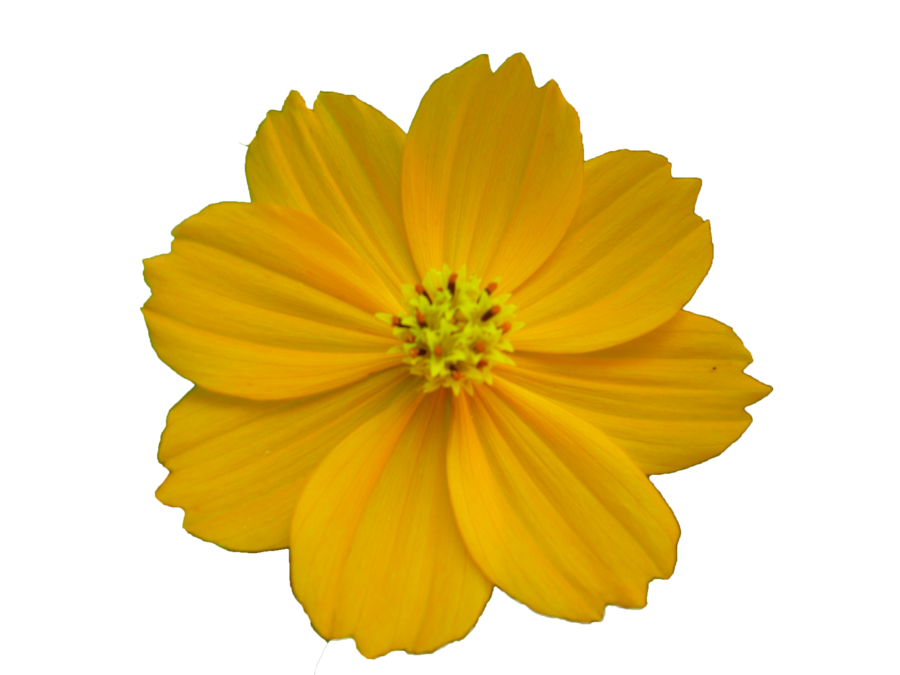 Free Flower Best Clipart Images