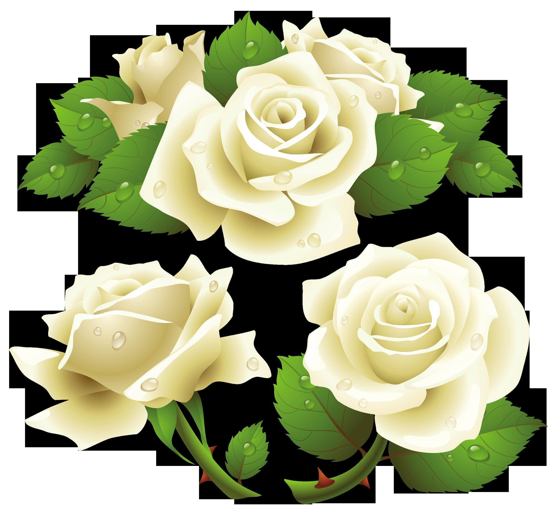 Flower Rose Garden roses Rose family Png