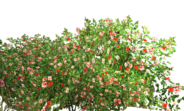 Flowers Garden Bush 2830 Free Icons And Png Backgrounds