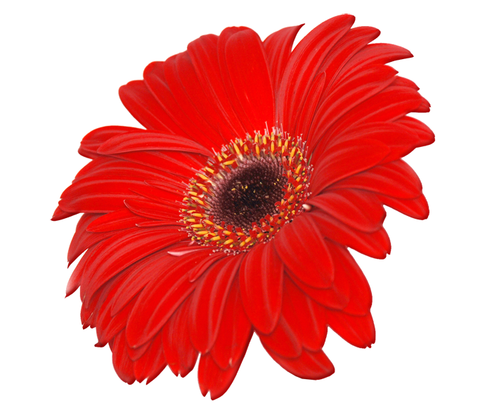 Image PNG Transparent Flower