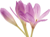 Flowers Spring Bouquets Tulips Image Hd Png image #43179
