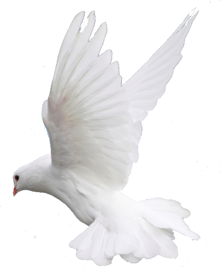 Fly, Flying, Dove, Wedding Image Png image #41748