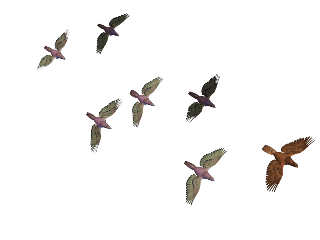 birds png free icons and png backgrounds