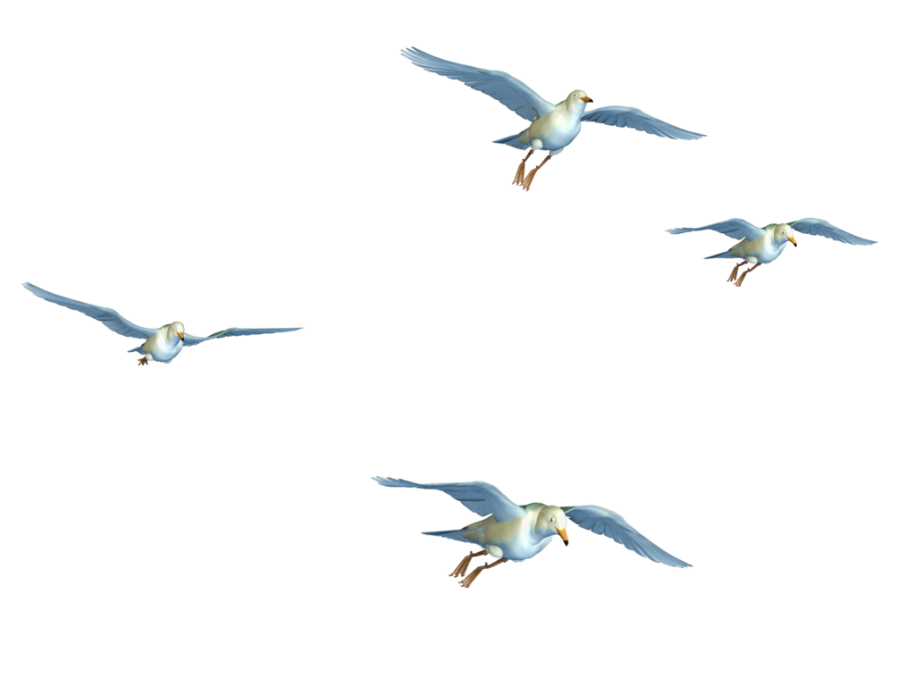 Flying Birds Png