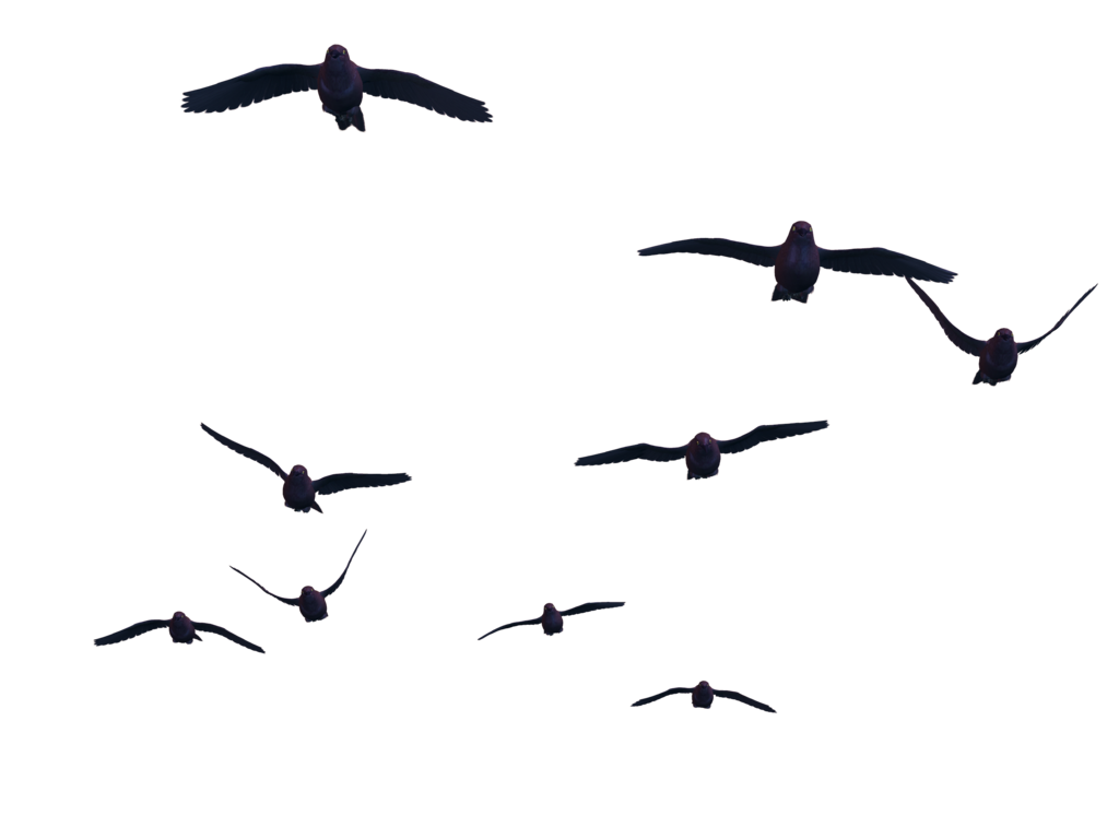 Flying Birds PNG Stock