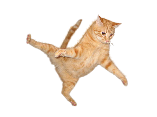Flying Cat Png image #40367