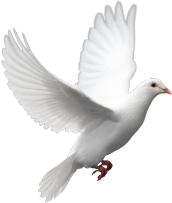 Flying Dove Png image #41739