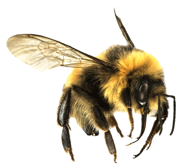 Free Download Of Bee Icon Clipart 12 image #45400