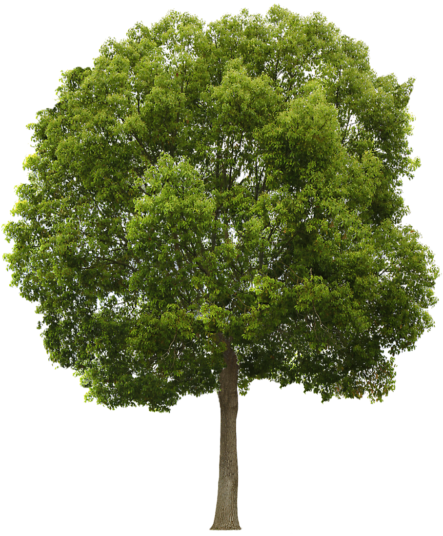 Tree Collection Clipart Png image #722