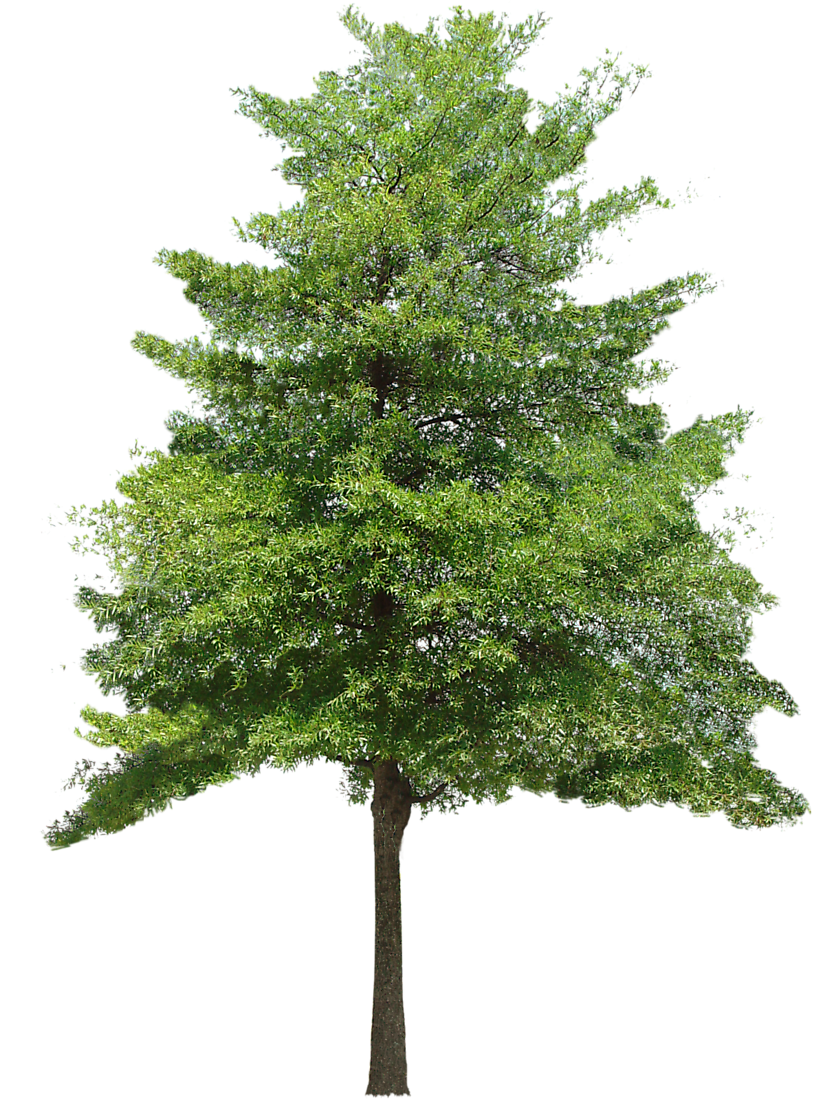 Free Download Tree Vector Png