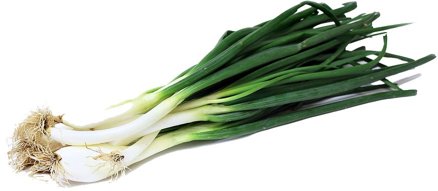 Fresh Onion Png image #38737