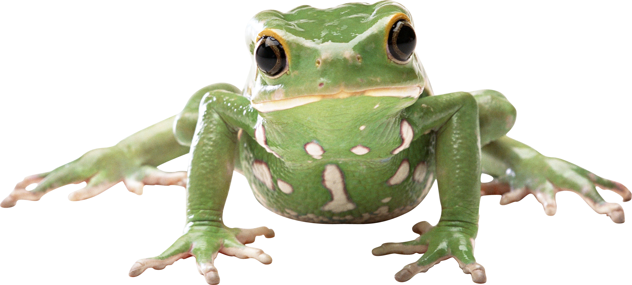 Frog face png