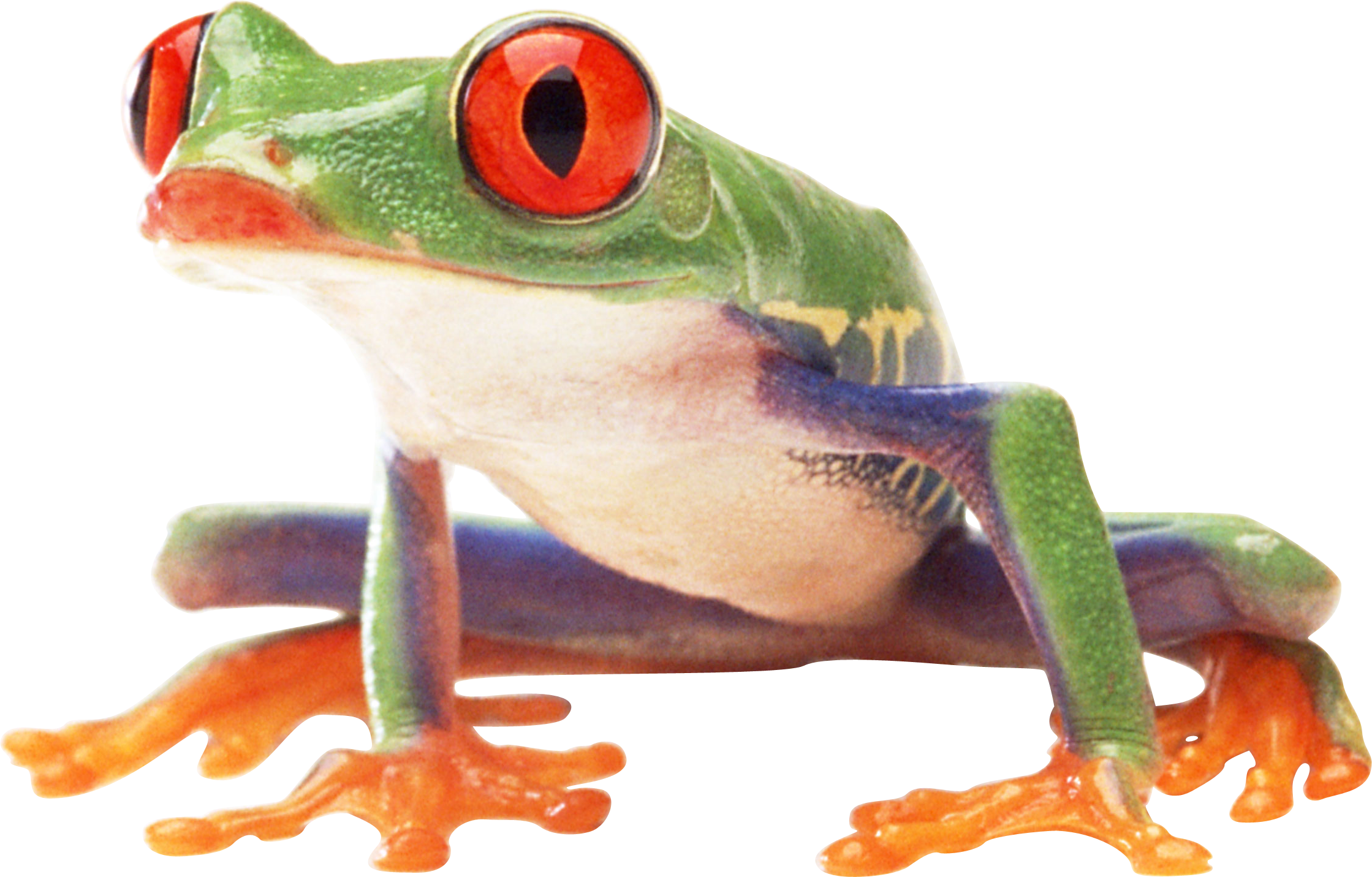 Frog PNG images