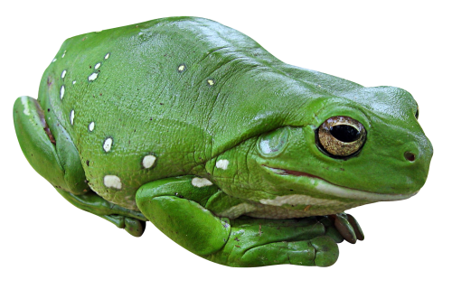 Frog PNG Photo image #43151