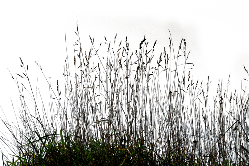 Gallery Tall Grass Png