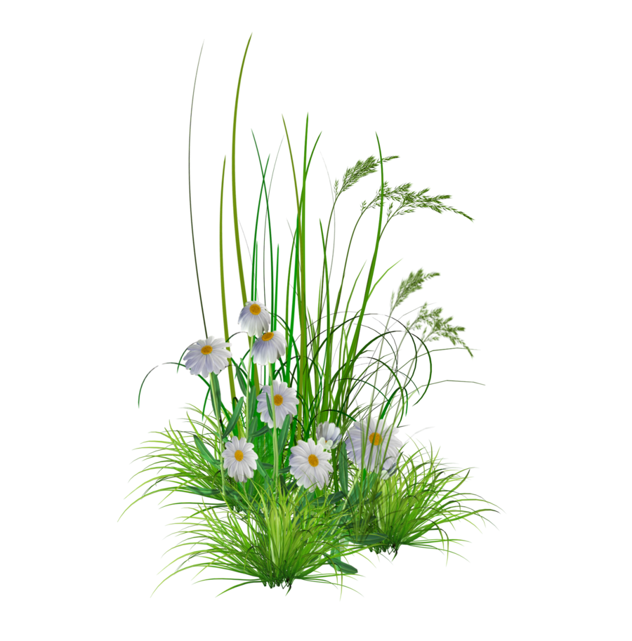 Flower Plants Png