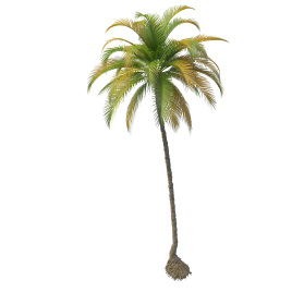 Get Coconut Tree Png Pictures image #46412