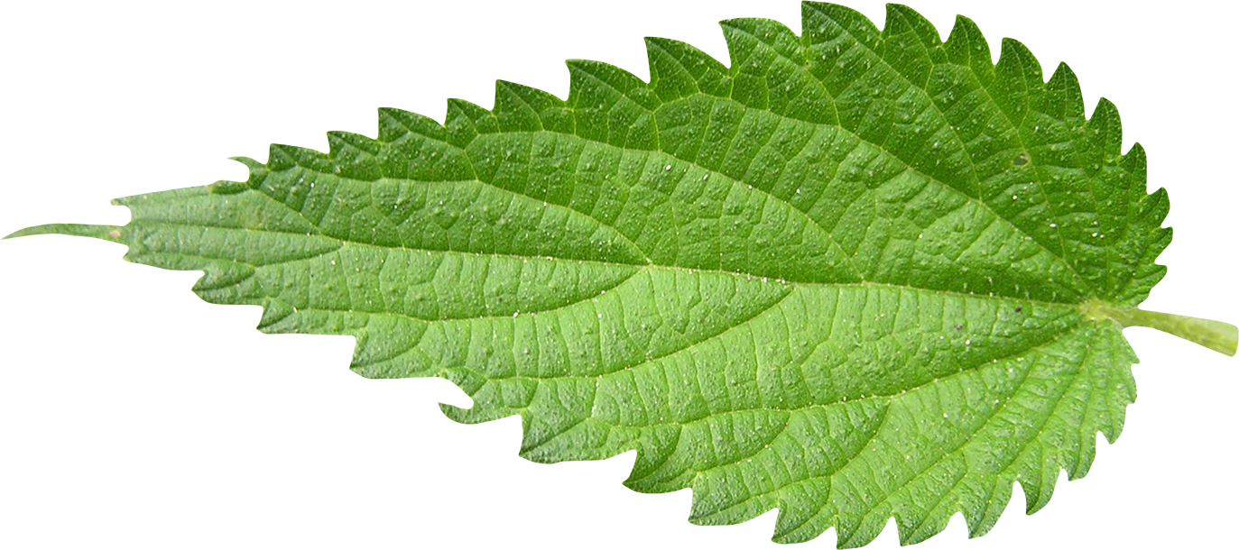 Get Nettle Photo Pictures image #48496