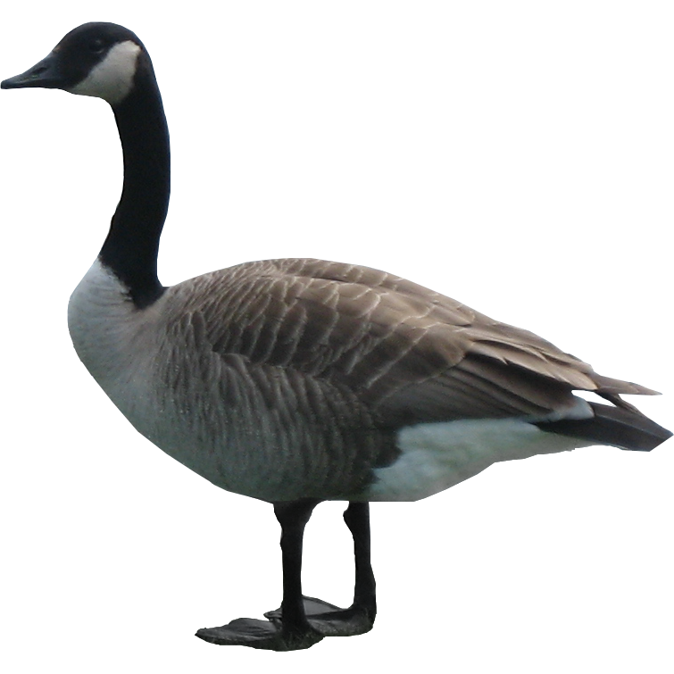 goose png image 33507 free icons and png backgrounds