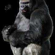 Gorilla Png image #37865
