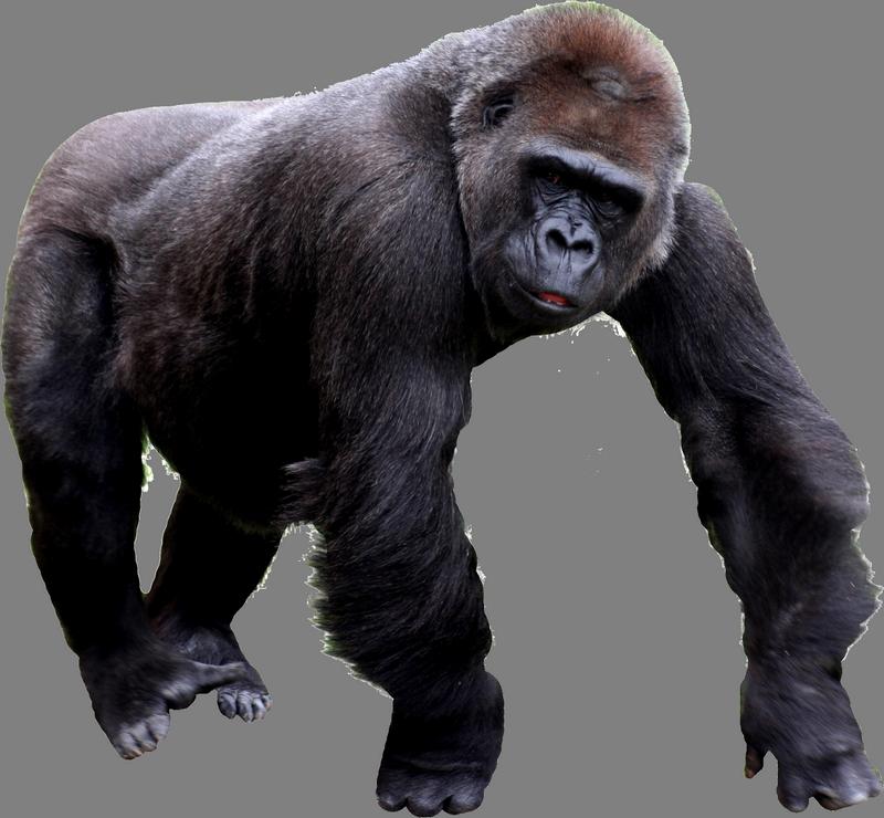 Gorilla Png image #37869