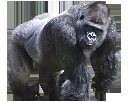 gorilla png