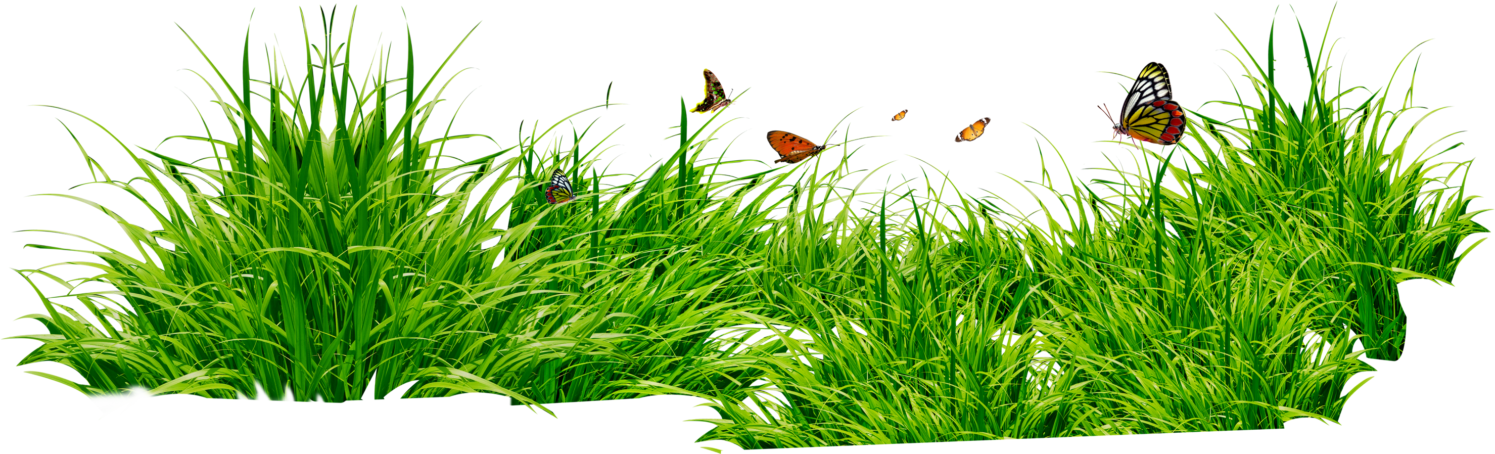 Grass Pictures Green Png image #44871