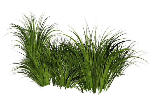 Grass Pic PNG image #4764