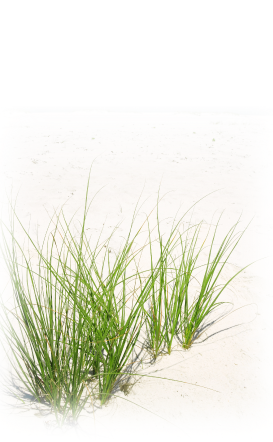 Download For Free Grass Png In High Resolution image #4766