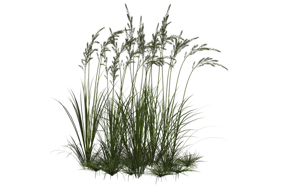 Clipart Png Collection Grass image #4769